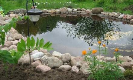 Обустройство водоема на загородном участке