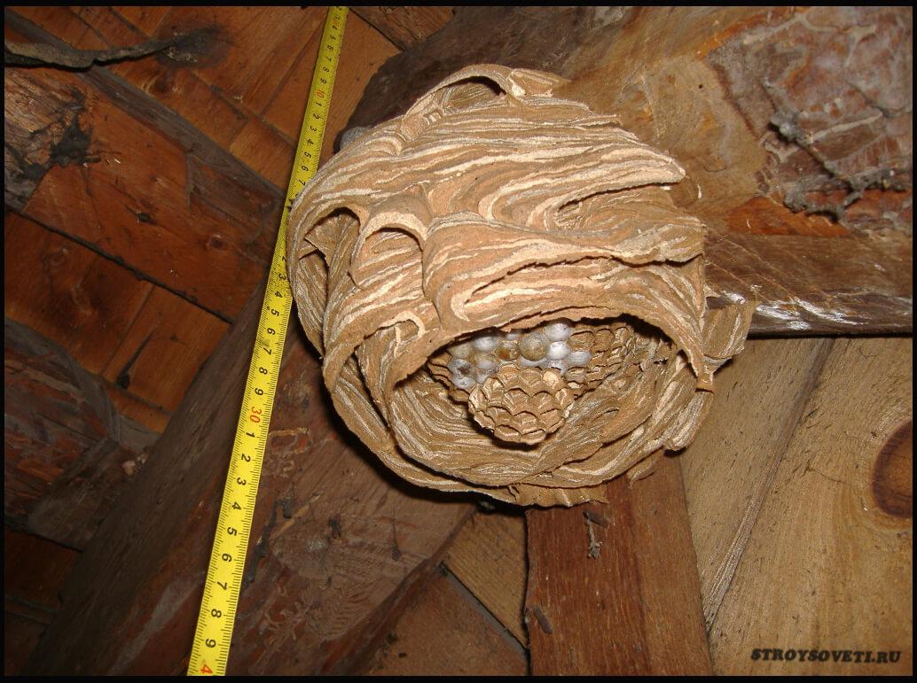 как вывести ос из под крыши дома