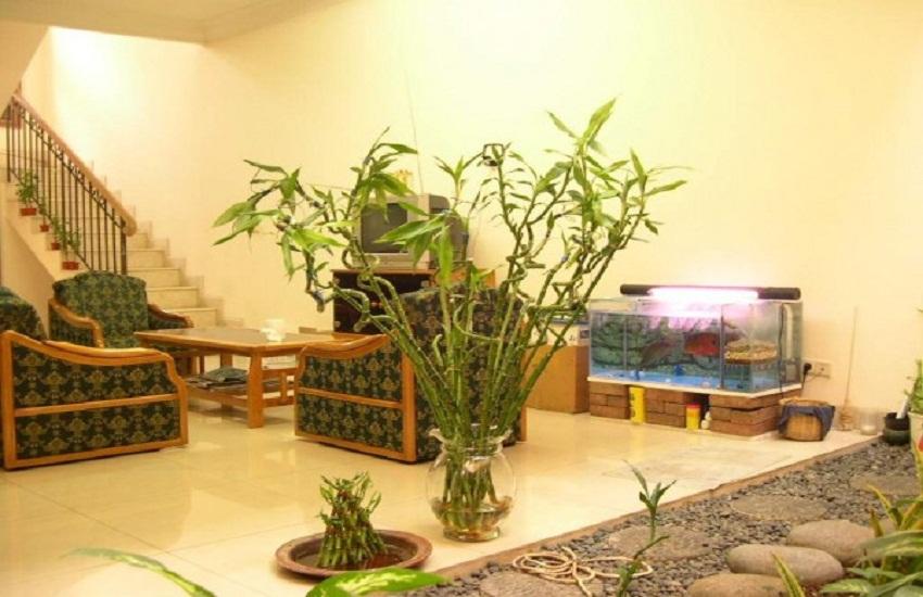 Цветы в интерьере маленькой квартир